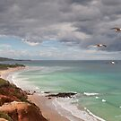 Southern Flyby  Signed Metal Print by Darryl Fowler