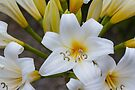 Easter Lily #2 by Elaine Teague