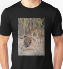 Young male lions resting in a riverbed Unisex T-Shirt