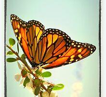 Monarch Flower by RichCaspian