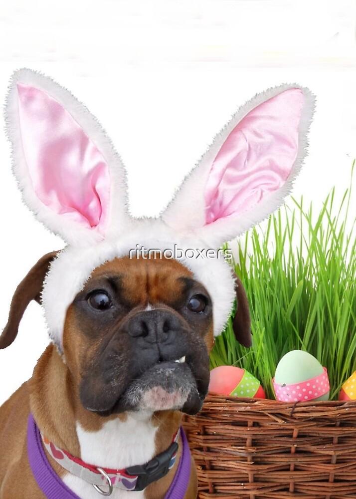 Boxer Hond met grappige bunny oren en Pasen mandje met ...  Boxer Dogs With Bunnies