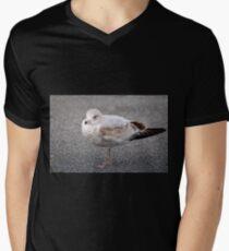 Ring Billed Gull Mens V-Neck T-Shirt