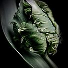 The green tulip by EbyArts