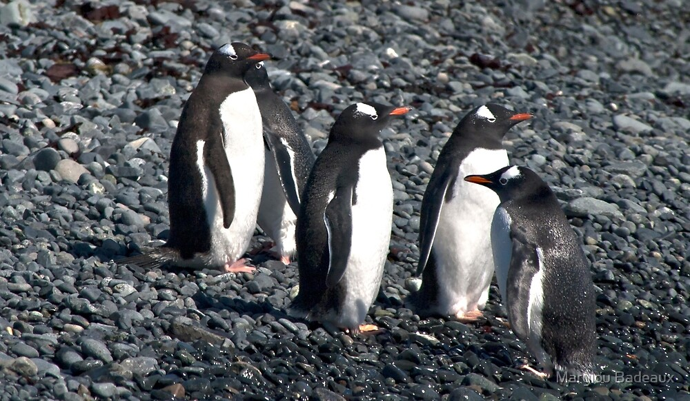 Wrong Way Penguin by Marylou Badeaux