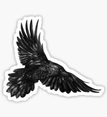 Raven in flight Sticker