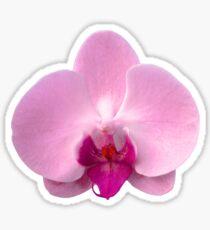 Orchid, Dorne Phalaenopsis in Light Pink Sticker