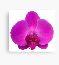 Orchid, Dorne Phalaenopsis Canvas Print