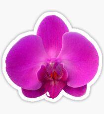 Orchid, Dorne Phalaenopsis Sticker