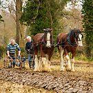 Working horses II by peaky40