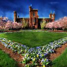 Spring Blooms in the Smithsonian Castle Garden by Shelley Neff