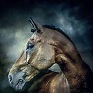 Stallion by Brian Tarr