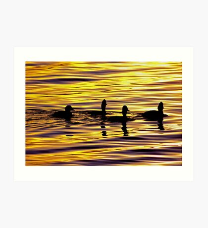 golden sunset lit water with ducks Art Print