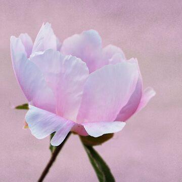 Pretty Pink Petals by GoatGirl
