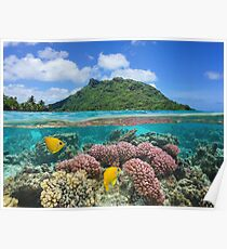 Island coral and fish underwater French Polynesia Poster