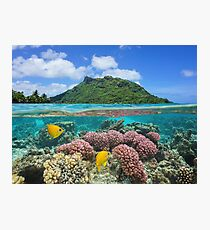 Island coral and fish underwater French Polynesia Photographic Print