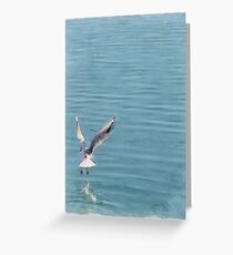 Seagull over the water Greeting Card