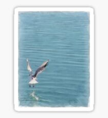 Seagull over the water Sticker
