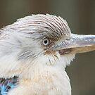 Blue-winged Kookaburra  by Kathryn Potempski