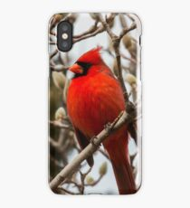 Cardinal in Pussy Willow iPhone Case