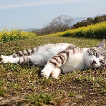 Cat nap by NYANKICHILABO