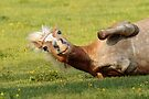 Rolling Horse by WorldDesign