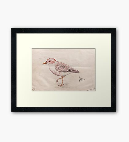 Temminck's Stint Framed Print