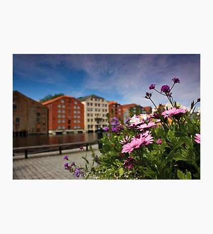 Flowers in Trondheim Photographic Print