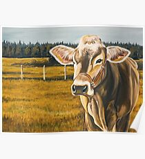 Gretchen, Brown Swiss Cow Poster