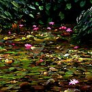 The Waterlily Lake by Imi Koetz