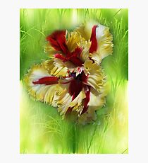 Other very especial tulip Photographic Print