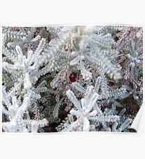 Hidden Ladybird  Poster