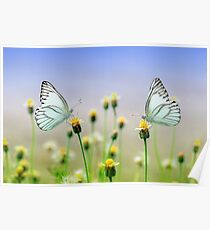Butterflies and Daisies Poster