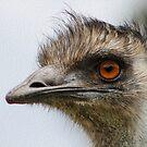 Baby Emu by Kathryn Potempski