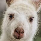 White Kangaroo  by Kathryn Potempski