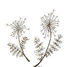Dandelions by Ibubblesart