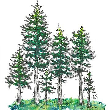 Watercolor and Ink Cypress Tree by Ibubblesart