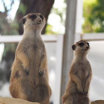 The Meerkats by JessDesignsxx