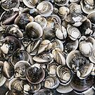 Fresh Clams by Bo Insogna