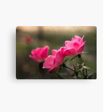 Pink Rose Canvas Print