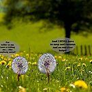 Dandelion whine by Susan Littlefield