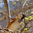 Pretty Bird by elledeegee