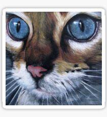 Blue eyed cat Sticker
