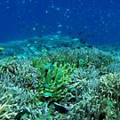 Reef Flat at Saru Namu-Namu Island. by Reef Ecoimages
