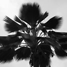 Palm Tree Variant by kenspics