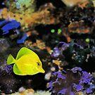 Tropical Angel Fish by Jason Pepe