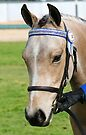 Portrait Of A Pony by Jenny Brice