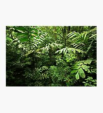 Heart of the Rain Forest (Costa Rica) Photographic Print