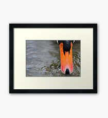 Orange Beak Framed Print