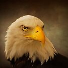 Eagle Portrait by ajgosling