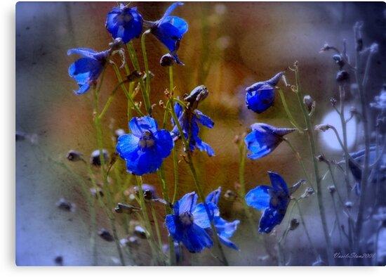 Summer blues by Vasile Stan